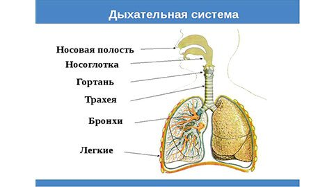 ХОЗЛ (хронічна обструктивна хвороба легень)