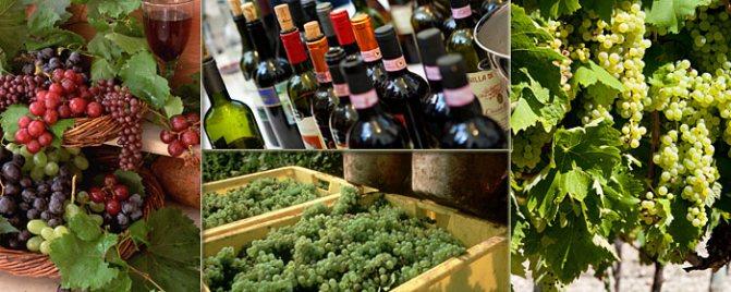 Італійські вина: кращий вибір
