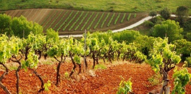 Як вібрато краще ІТАЛІЙСЬКЕ вино