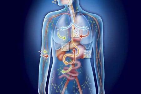 організм людини