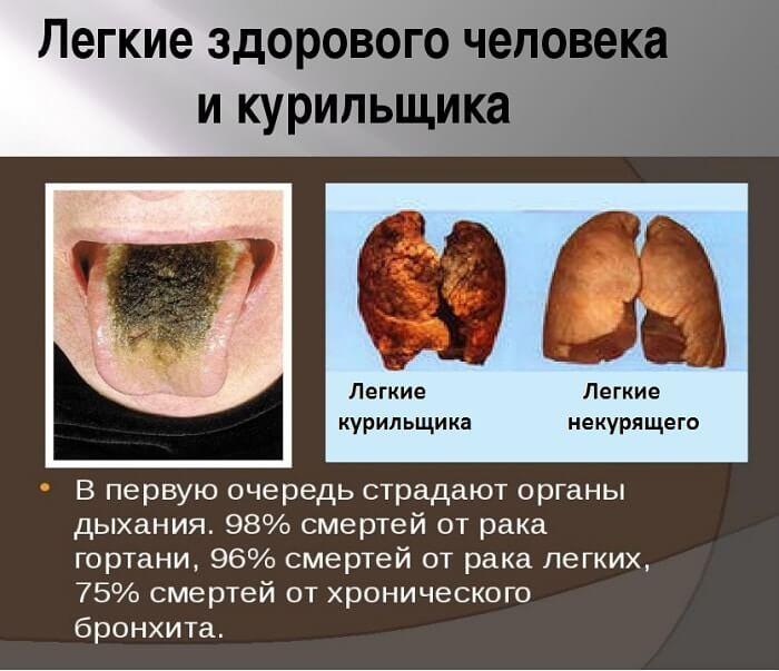 Органи дихання людини