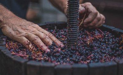 виробництво червоного вина