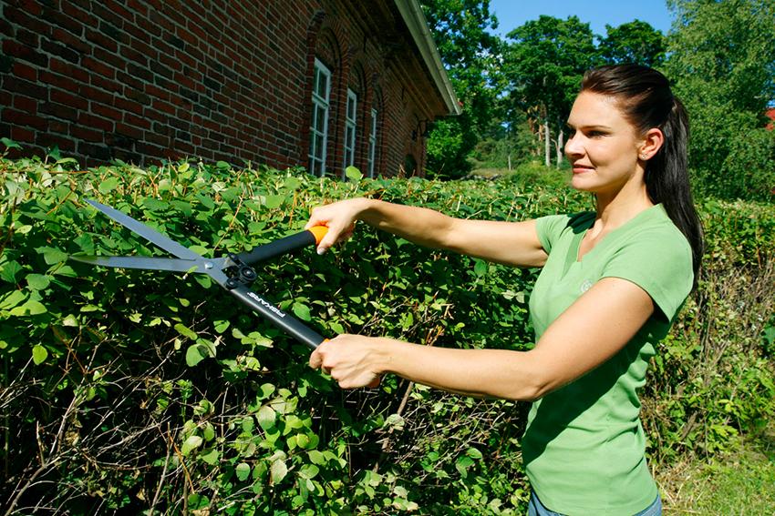 Обрізка кущів за допомогою садових ножиць