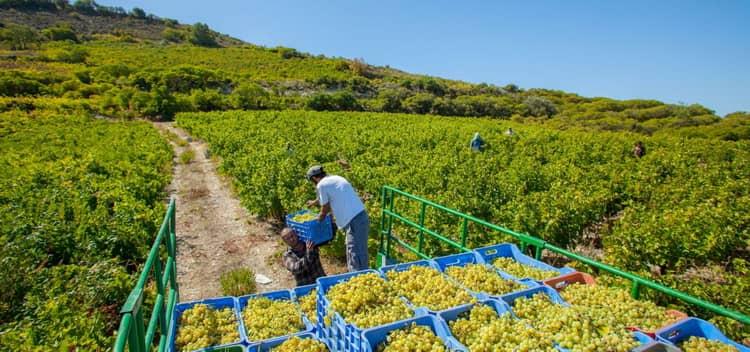В які регіонах роблять вино на Кіпрі