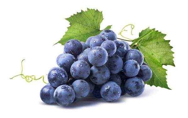 вино з винограду Ізабелла шкоду і користь
