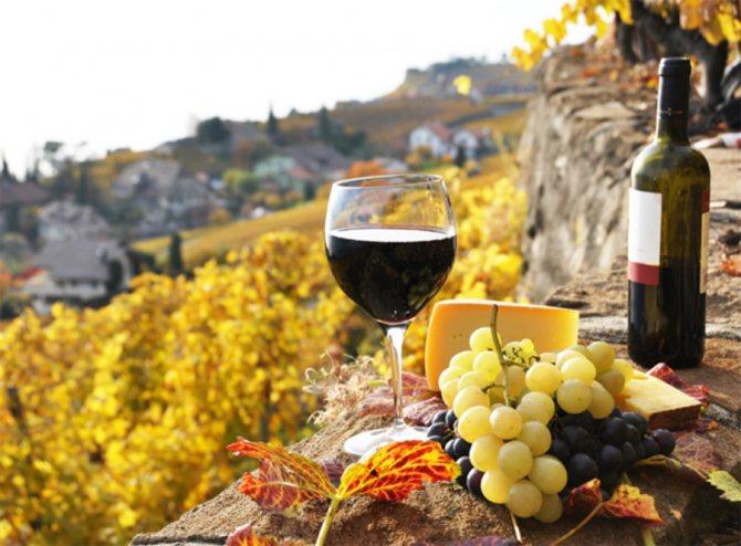 Вино Найкраще пробувати там, де его віробляють