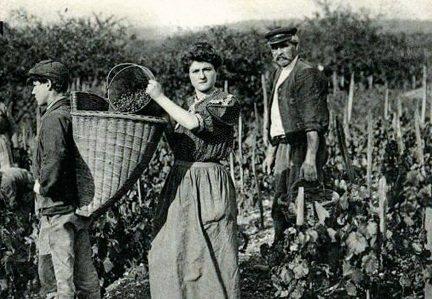Виноробні регіони Франції. Список найвідоміших. Опис, сорти вин