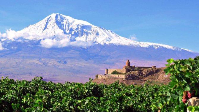 виноградники Вірменії