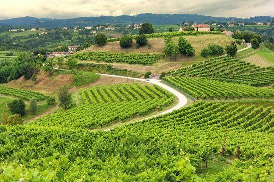 Виноградники на Пагорб вальдобб'ядене