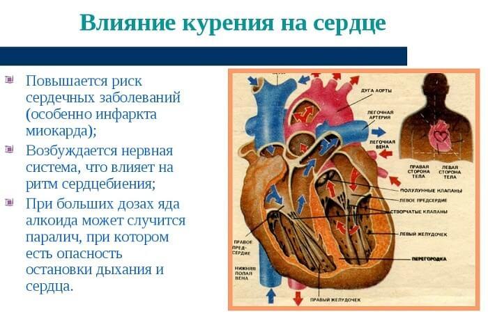 Вплив на серце