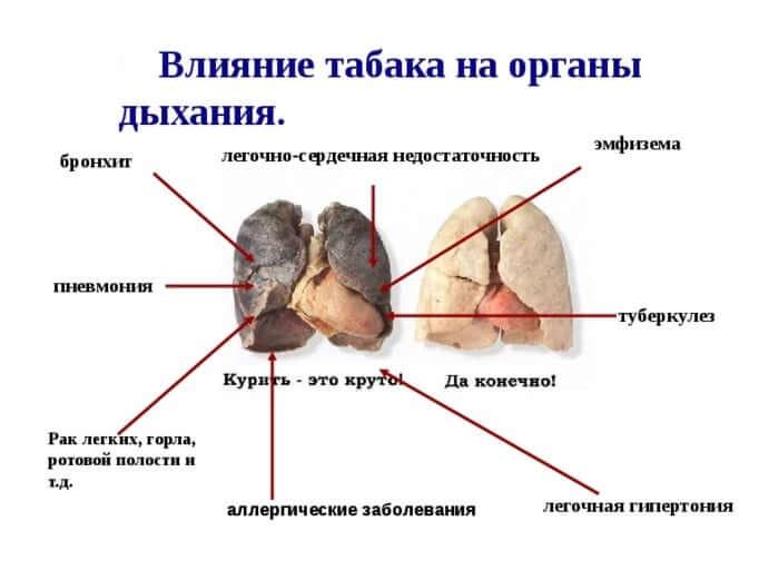 вплив тютюну