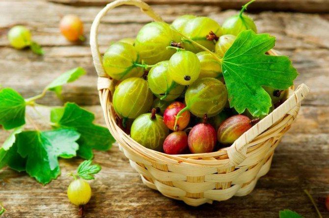 ягоди агрусу