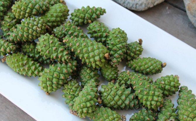 Зелені соснові шишки